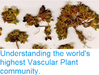 http://sciencythoughts.blogspot.co.uk/2016/12/understanding-worlds-highest-vascular.html