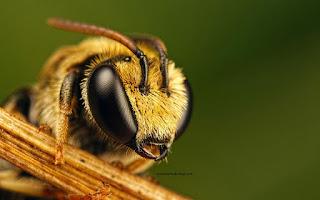 Arı Sokmasının Belirtileri