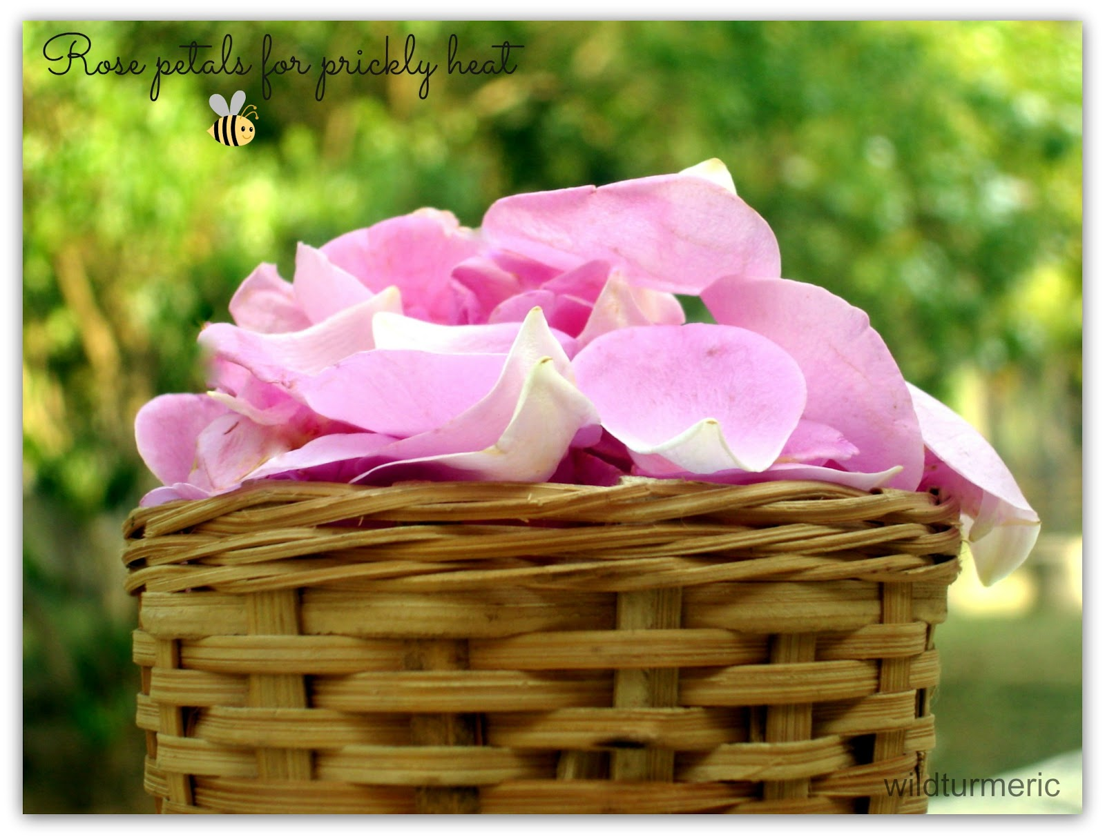 5 Amazing Benefits & Uses Of Rose Petals For Skin, Hair, Lips & Health