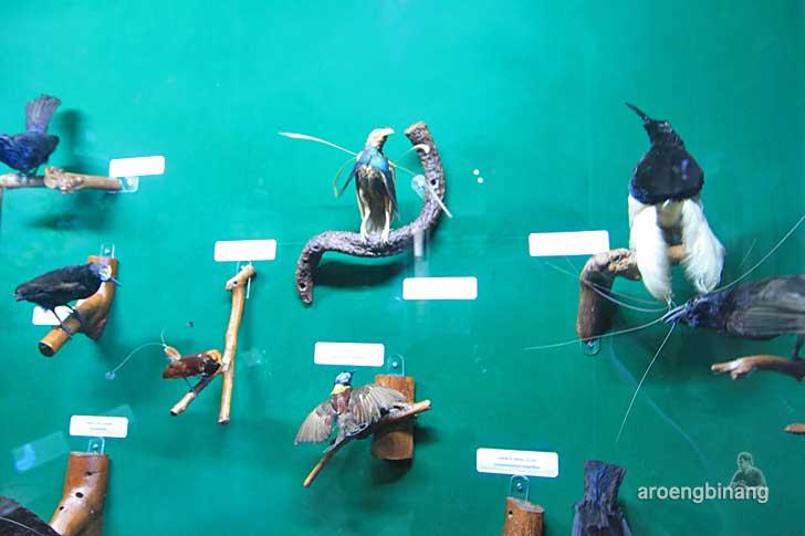 burung langka museum zoologi bogor