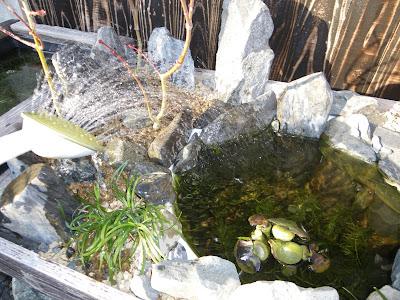 メダカ盆栽 足し水 水遣り