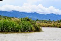 pemandangan dari dalam bot di Sungai Perak