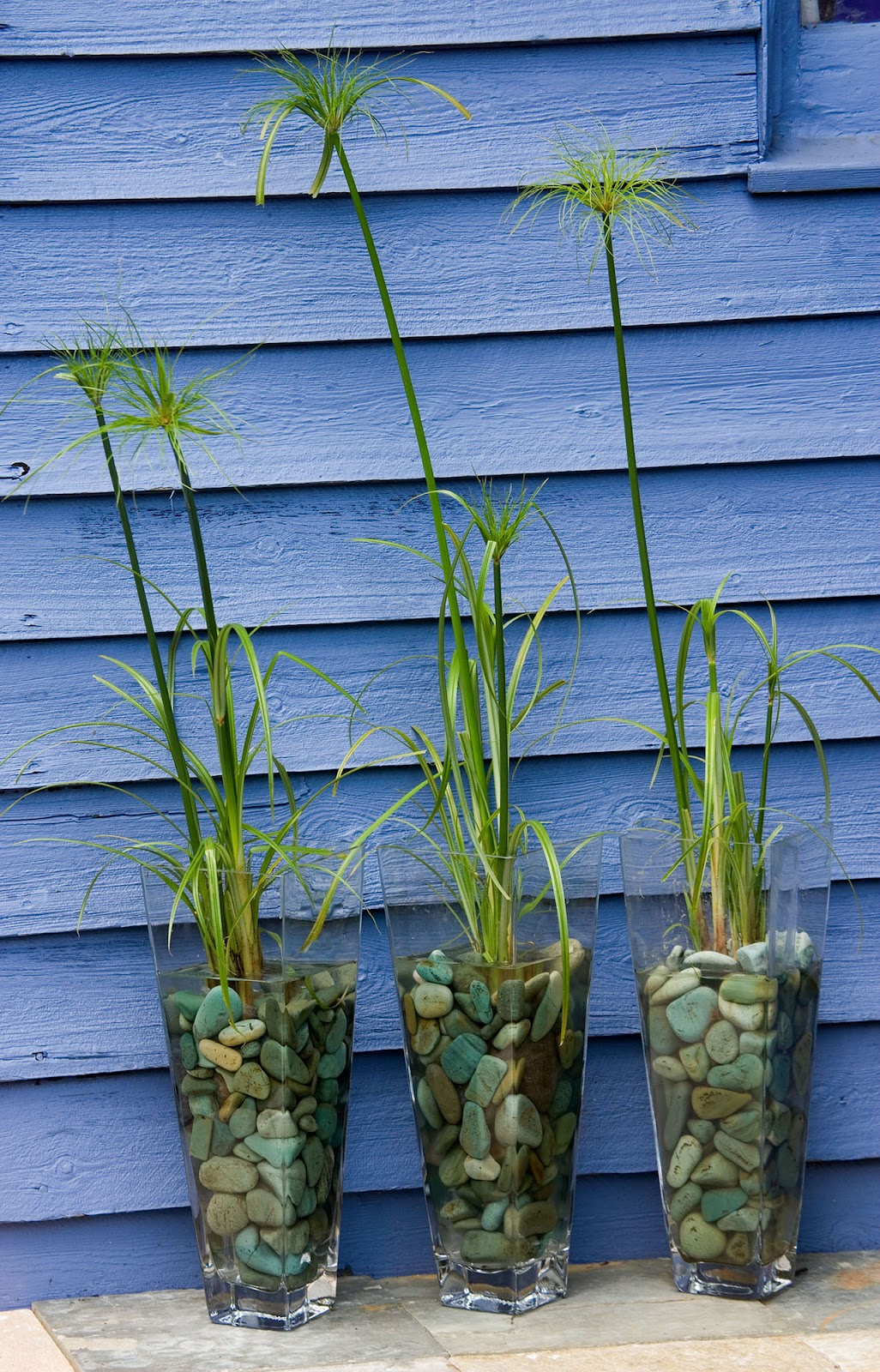 Marginal Water Plants