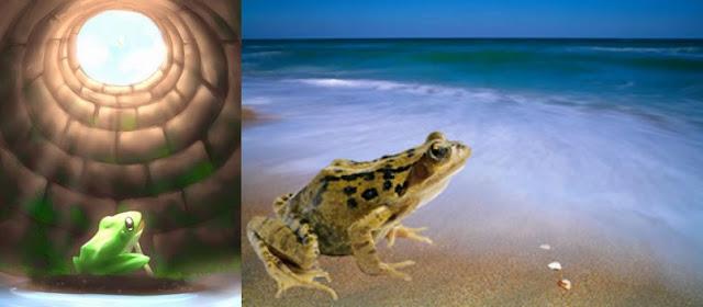 Broască de fântână şi broască de ocean - Povestire Feng Shui