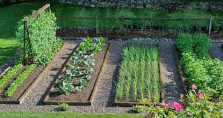jardin con huerta