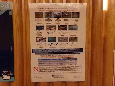 Haie in Gefahr - Die Konferenz Bild 03