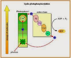 aliran elektron siklik
