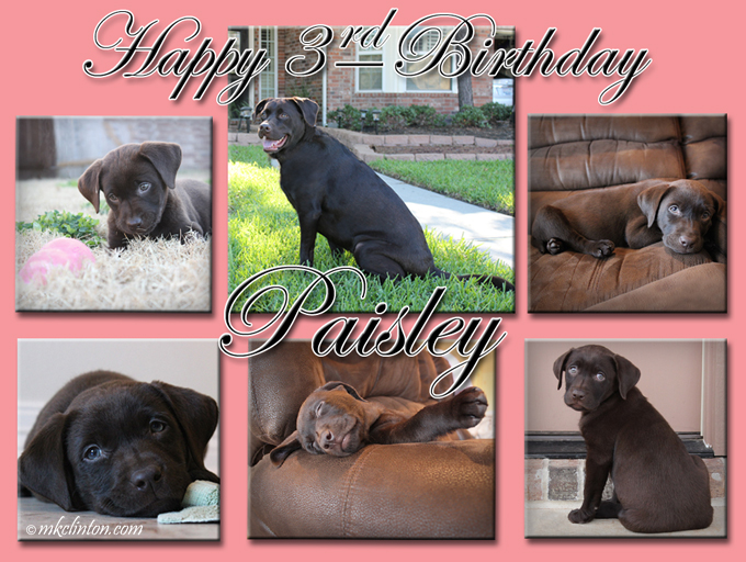 Collage of Paisley the Weather Lab for her birthday