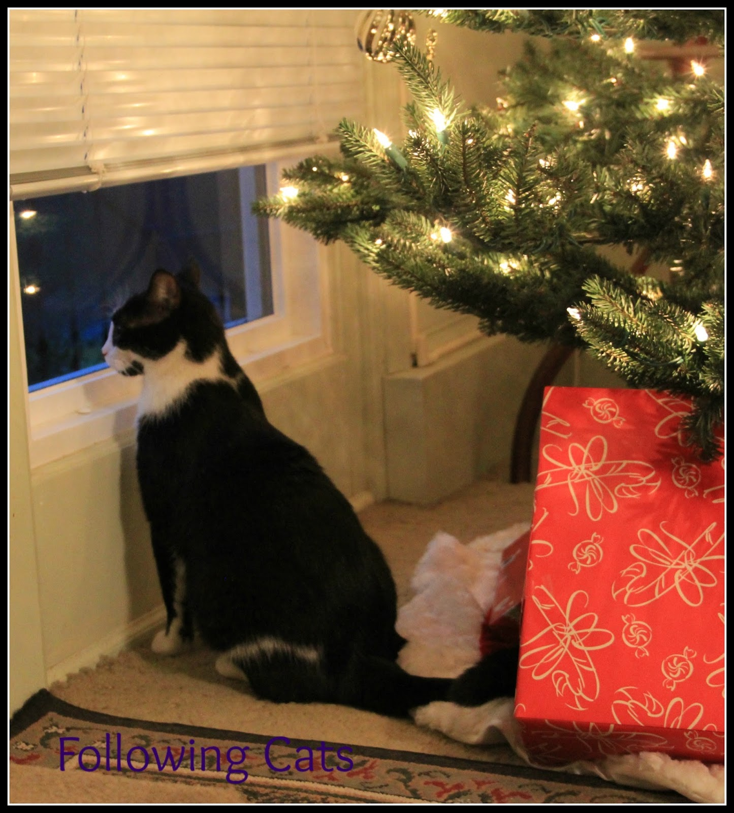 Following Cats: Keep your pets safe during the holidays