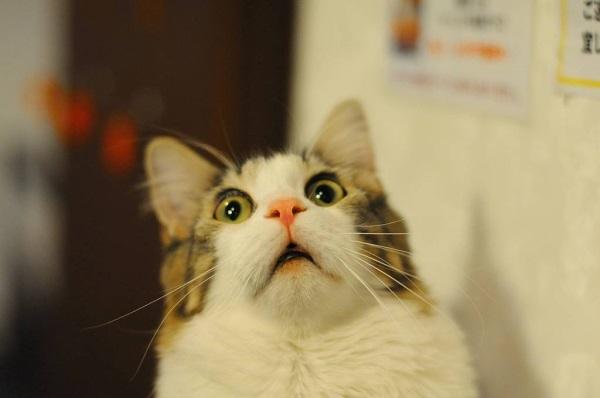Meme Gambar Kucing Lucu Yang Bikin Ngakak Pecinta Kucing