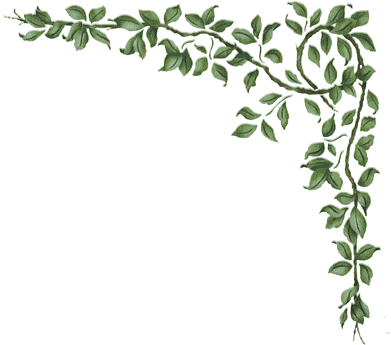 Plantas: Orillas para Scrapbooking.