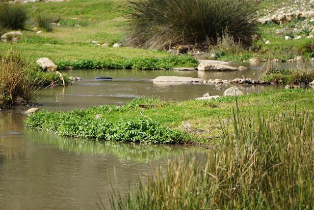 צמחים בנחל ציפורי