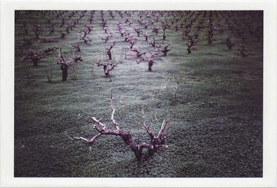 dirty photos - time - cretan landscape photo of vineyards in heraklion