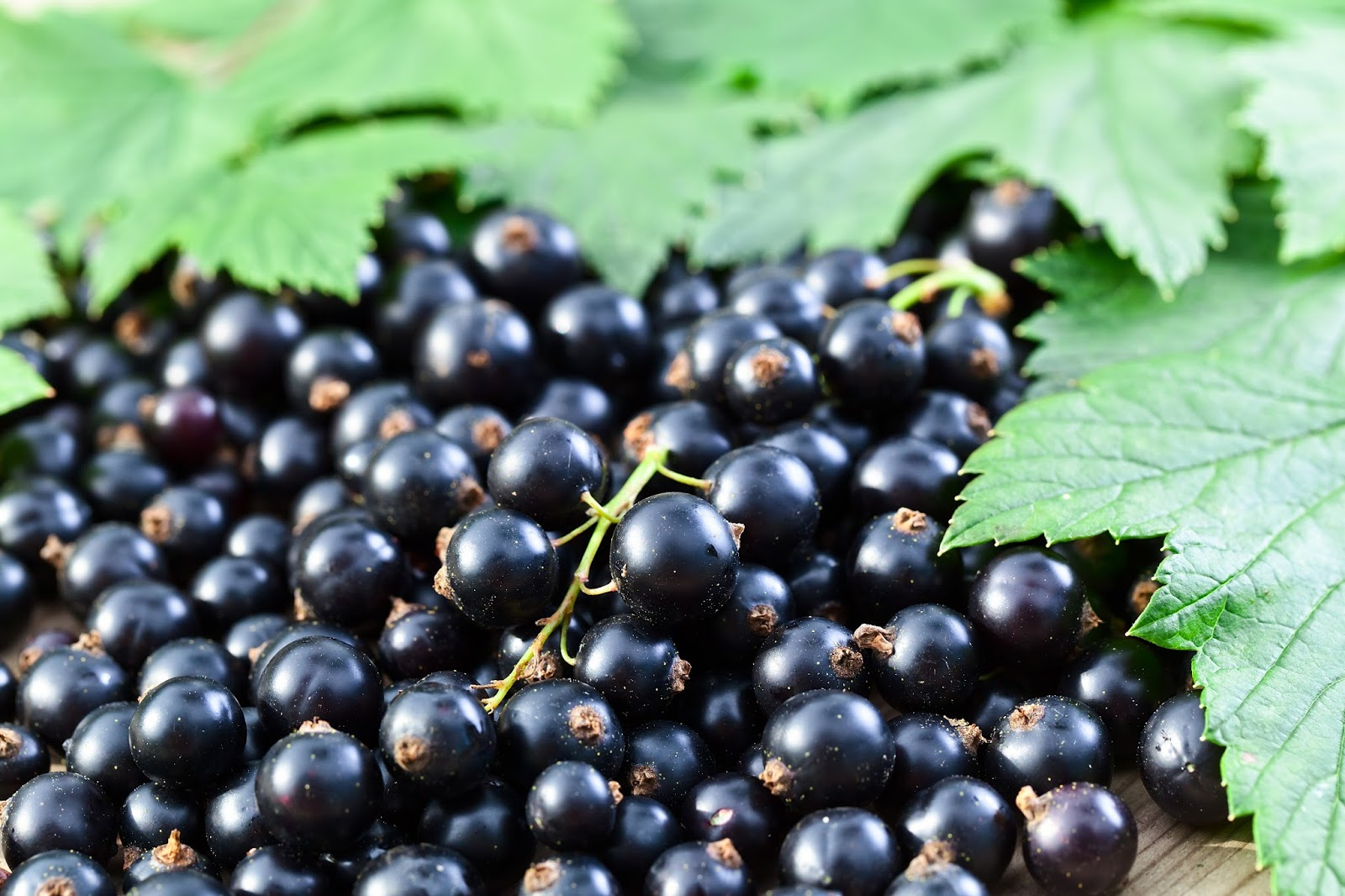 Fresh-Picked Beauty: Black Currant Complexion Oil