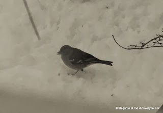 hiver, neige, moineau