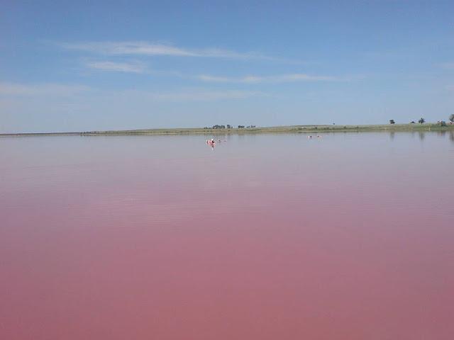 Розовое озеро в Алтайском Крае