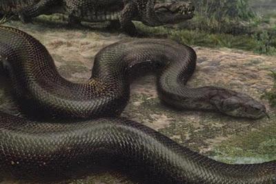 serpientes gigantes Titanoboa