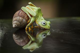 funny frogs pictures