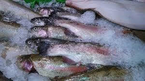 Cara Bisnis Ikan Laut