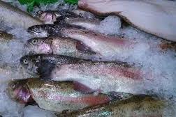 Cara Bisnis Ikan Laut Konsumsi Supaya Laris dan Menguntungkan
