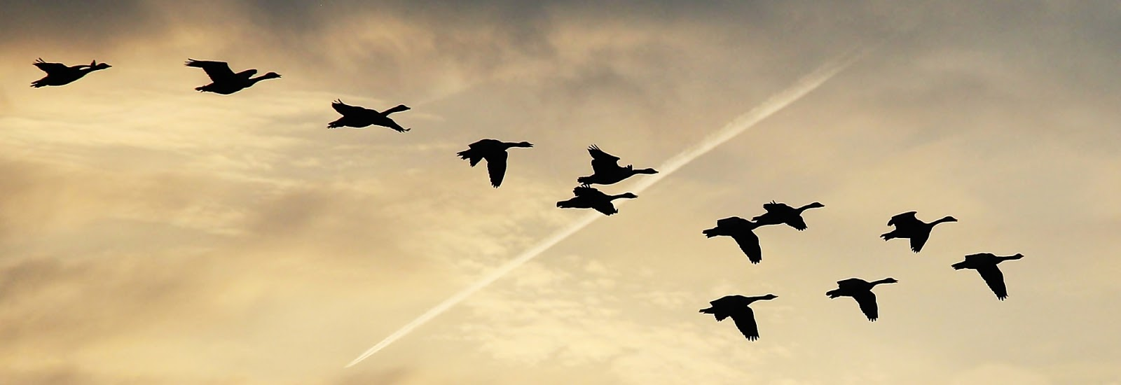 Formation of Geese
