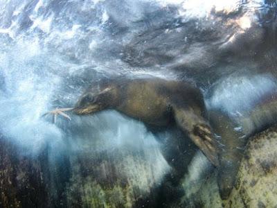 Під водою