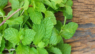 Lose Weight Quickly Using Mint Leaves