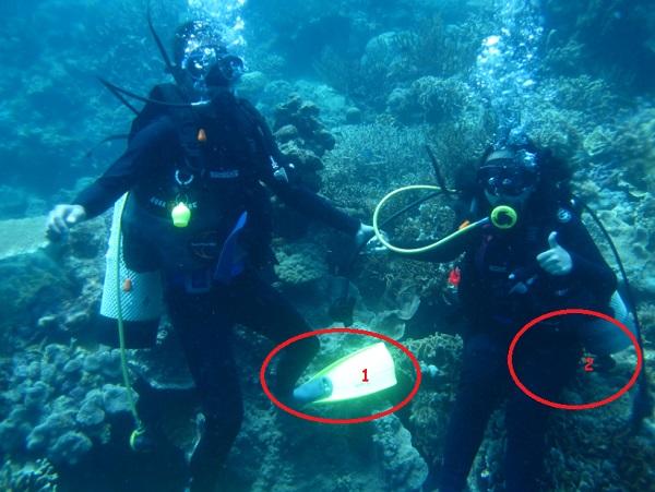 gambar kesalahan buoyency / melayang terkena terumbu karang saat diving