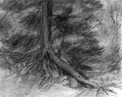 art drawing charcoal tree evergreen roots nature