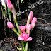 Bunga Kantan & Awet Muda