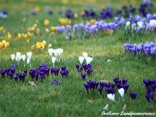 Krokusse im Britzer Garten