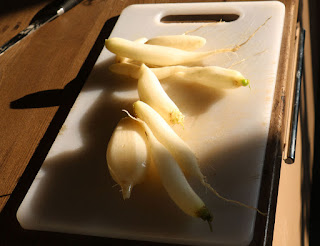 Icicle Radish ready for the pot