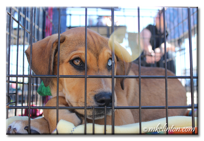 Brown puppy in kennel