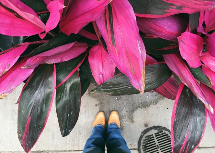 Tropical Plant // WWW.THEJOYBLOG.NET
