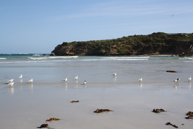 Middle Island,Warrnambool