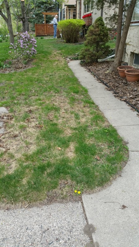 Lawn Still Looking Winter Ragged E Z Steps To Repair Your Turf