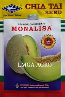 MELON MONALISA, JUAL MELON MONALISA, MELON MONALISA HARGA MURAH, MELON MONALISA CAP KAPAL TERBANG