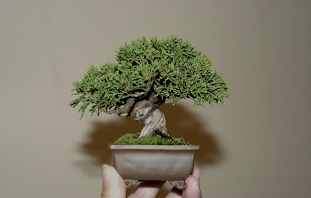 Cara Membuat Miniatur Pohon Hias Dari Barang Bekas