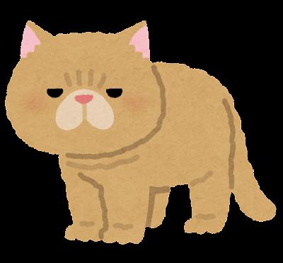 エキゾチックショートヘアのイラスト(猫)