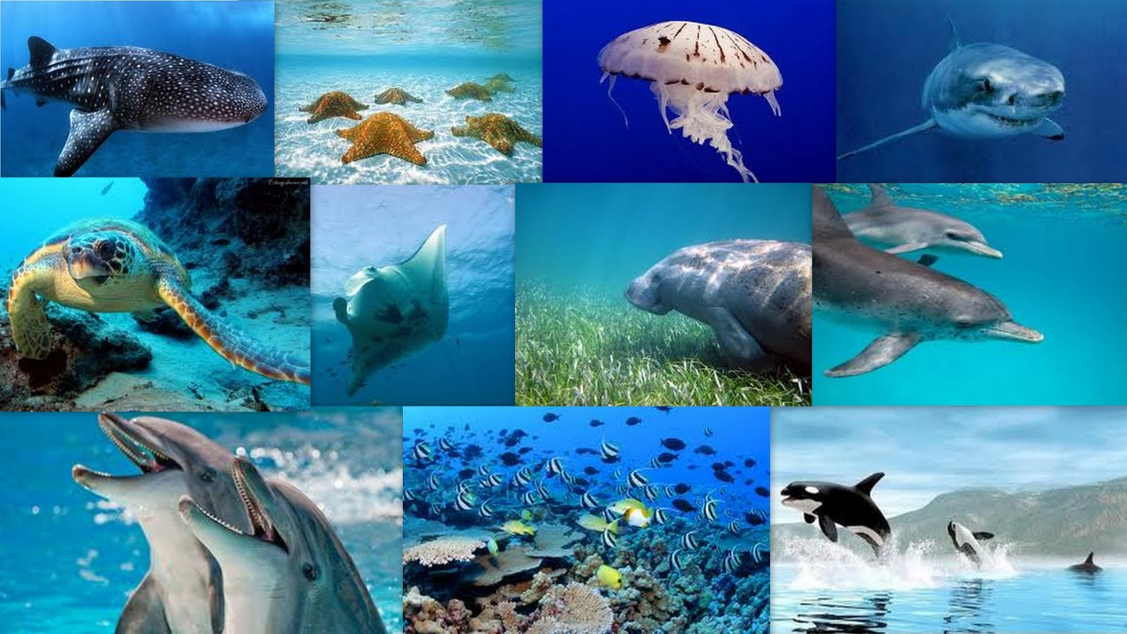 Pictures Of The Marine Biome 103