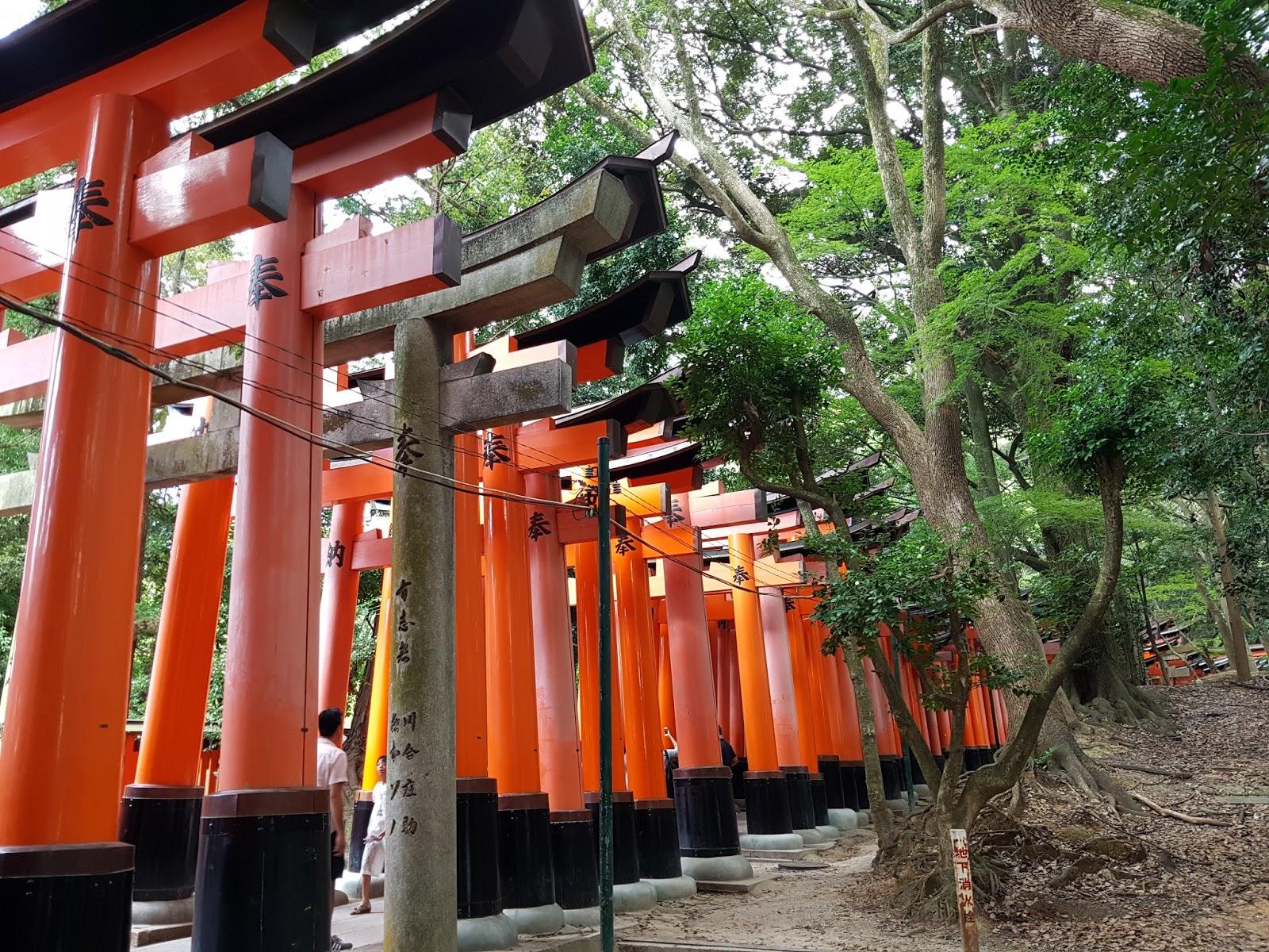 Fushimi Inari Electricity Red Torii