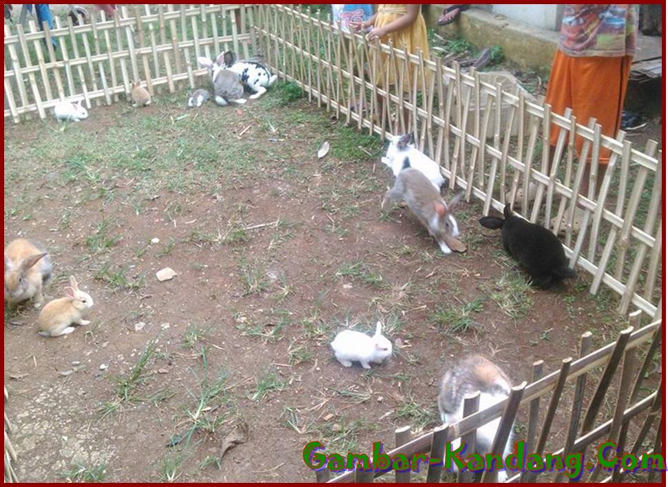 Contoh Pagar Kandang Umbaran Kelinci dari Bambu dan Besi