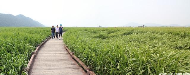 Paseando por la Bahía Suncheonman