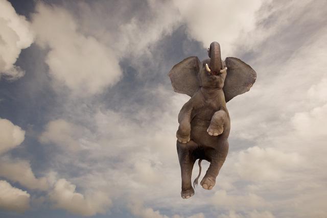 Misteri Dumbo Effect dan Kisah Gajah yang Bisa Terbang