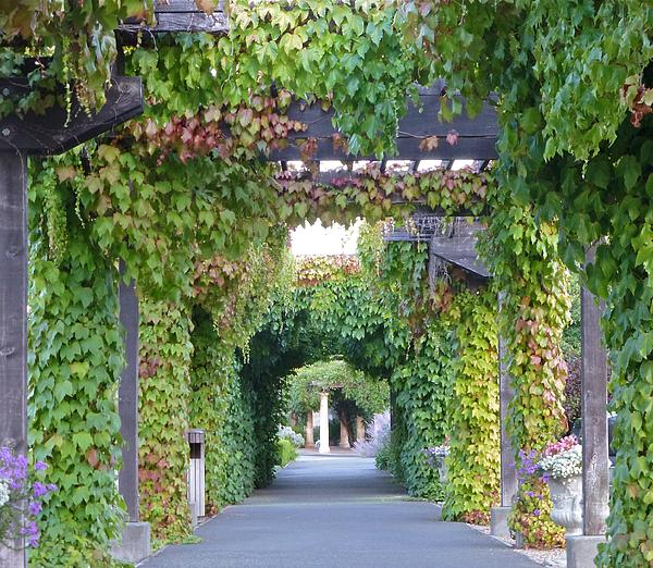 Grape Arbor Kit Arbor Tool Galleries