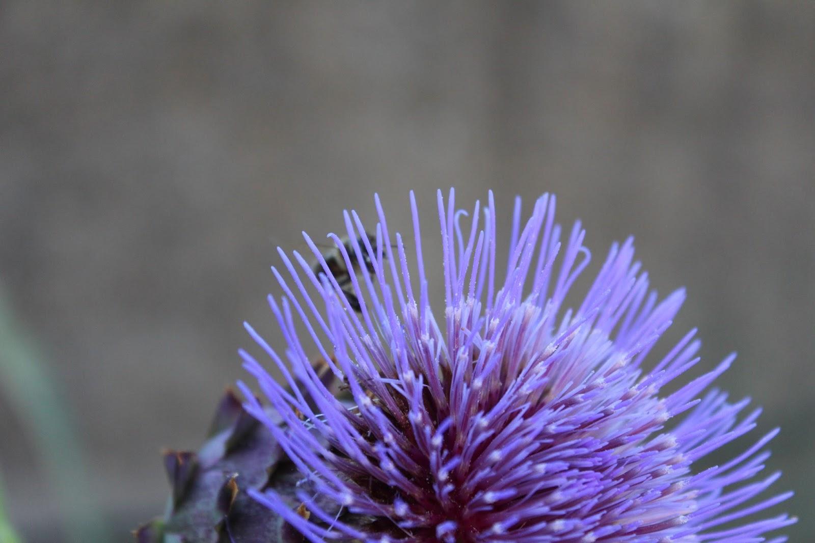 Perfumes y luces de extremadura visitantes del jard n for Ahuyentar abejas jardin