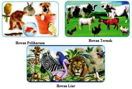hewan