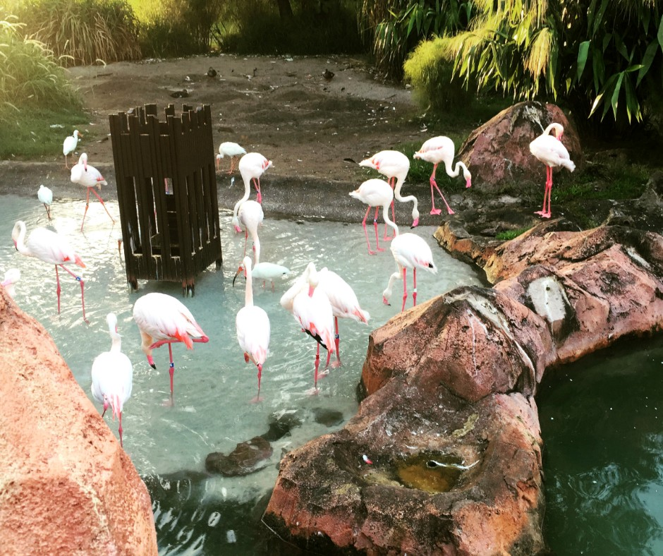 animal-kingdom-lodge-flamingo