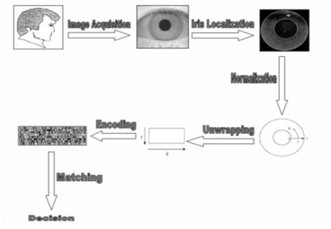 Iris Recognition Process (Penny Khaw, 2002) Figure 7: Iris Recognition Process