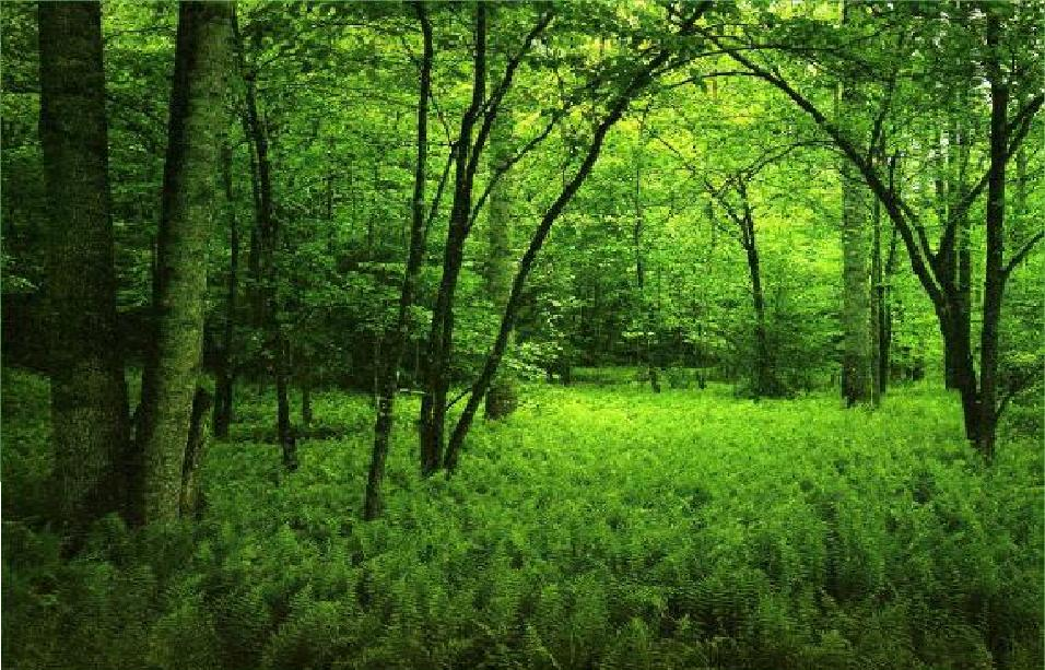 Cute Heart Wallpapers Download Top 22 Awesome Amazing And Beautiful Greenery Wallpapers In Hd